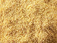 Millet grain stock photos
