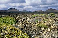 Europe/Espagne/Canaries/Lanzarote/Jameos del Agua : La végétation et les volcans aux environs