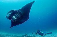 A photographer shoots a reef manta ray, Manta alfredi, Manta Sandy, Dampier Strait, Raja Ampat, West Papua, Indonesia, Pacific Ocean (No MR)