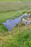 Northumberland,  England, UK.  Swan on Crag Lough, from Peel Crags, Hadrian's wall (Pennine Way) Footpath.