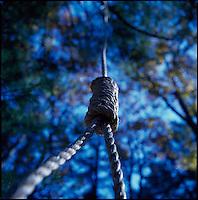 Hangman's noose<br />