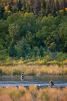 Sport fishermen share the Brooks River with bears when fishing for salmon, Katmai National Park, Alaska.