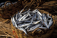 AJ2498, Dominica, fish, Caribbean, Caribbean Islands, Fish in a basket in Portsmouth on the island of Dominica.