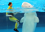 """April 26, 2017, Yokohama, Japan - Shiori Tamai, a member of Japanese girls only pop group """"Momoiro Clover Z"""" (MCZ) performs with a white beluga at the aquarium of the Hakkeijima Sea Paradise in Yokohama, suburban Tokyo on Wednesday, April 26, 2017. The aquarium will start the new attraction with sea aninals featuring a MCZ's TV program for children from April 28.   (Photo by Yoshio Tsunoda/AFLO) LwX -ytd-"""