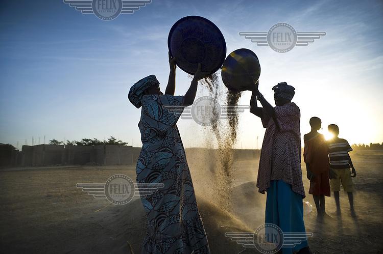 Women winnowing the rice harvest. .