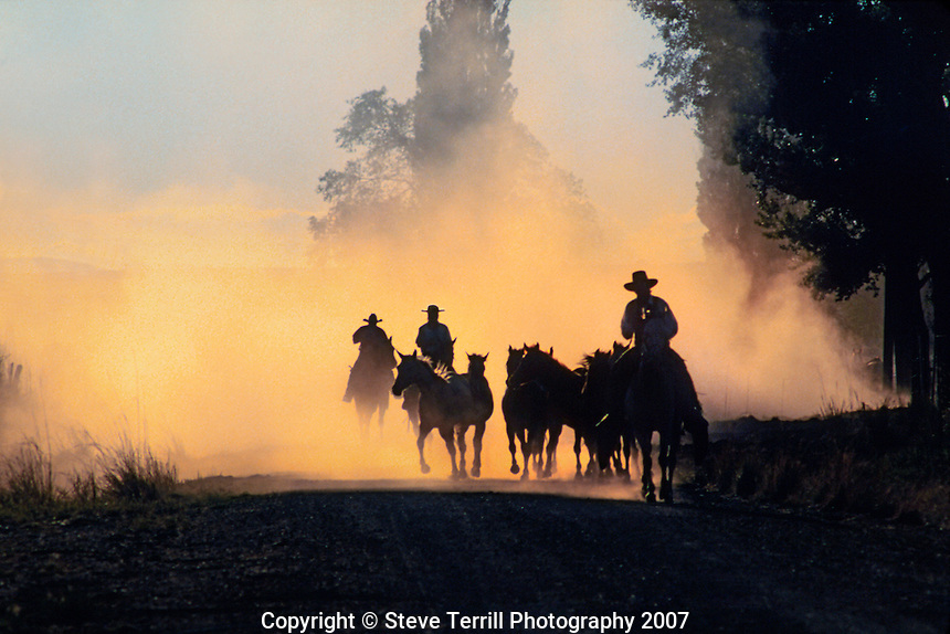 Cowboys driving horses to corral