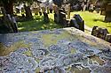 Lichen {Parmelia saxatilis} growing on gravestone in churchyard. Peak District National Park, Derbyshire, UK. March.