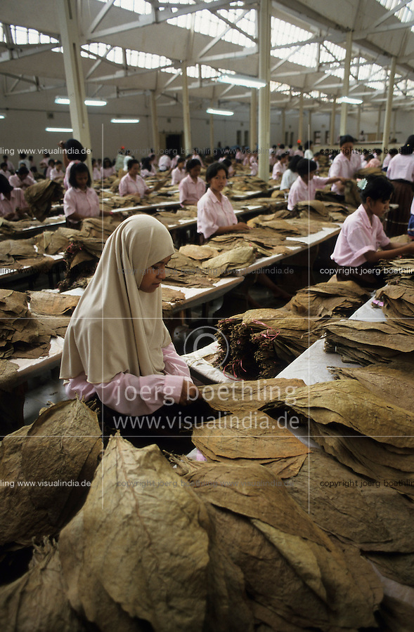 INDONESIA Java Jember, women sort tobacco leaves in factory / INDONESIA Java Jember, Frauen sortieren Tabakblaetter fuer Zigarren in einer Fabrik