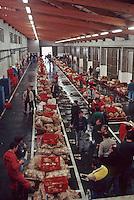 Europe/France/Bretagne/22/Cotes d'Armor /Erquy: Principal port de pèche à la coquille Saint Jacques