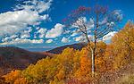 Shenandoah National Park, VA: Late fall color on the overlapping hillsides along Skyline Drive