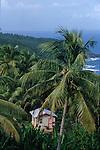 Case isolee dans la jungle du territoire Caraibe. Cote est de l ile de la Dominique.