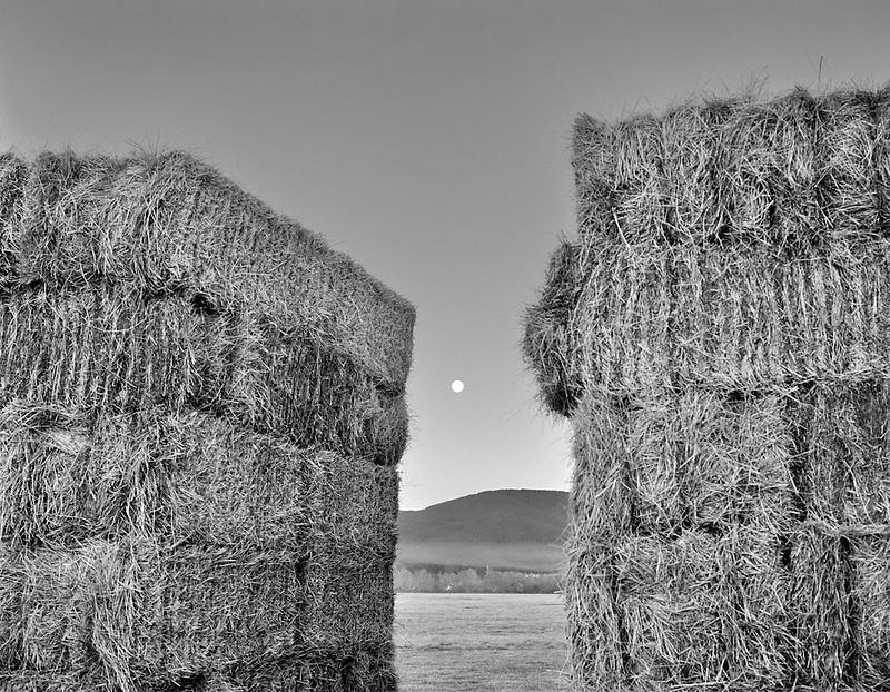 Hay with fog and moon. Near Alpine, Oregon