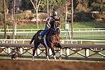 October 27, 2014: Saayad exercises in preparation for the Breeders' Cup at Santa Anita Park in Arcadia, California on October 27, 2014. Zoe Metz/ESW/CSM