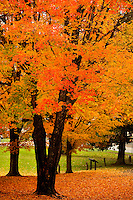 Each fall the North Carolina mountain forests (Blue Ridge Parkway) transform themselves a tapestry of brilliant oranges, reds and yellows. In autumn 2009, the tree-lined Blue Ridge Mountains were a popular spot for travelers, tourists and visitors seeking beautiful vistas of fall leaf foliage.