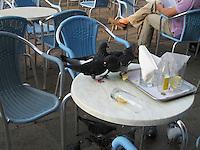St. Mark's pigeons enjoying a cafe