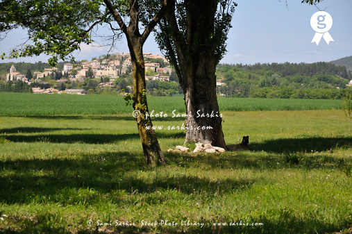 Tree in  a field with Vallauris village - Vallauris village, Drôme (Licence this image exclusively with Getty: http://www.gettyimages.com/detail/82406579 )