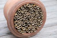 Wildbienen-Nisthilfe aus Bambus, Bambusstange, Bambusstangen, Bambus-Nisthilfe, Bambusstab, Bambusstäbe. Schritt 3: die etwa 20 cm langen Baumbusstäbe werden in einen Blumentopf gesteckt, Kübel, Tontopf, Terrakotta-Topf, Terracotta-Topf. Wildbienen-Nisthilfen, Wildbienen-Nisthilfe selbermachen, selber machen, Wildbienenhotel, Insektenhotel, Wildbienen-Hotel, Insekten-Hotel
