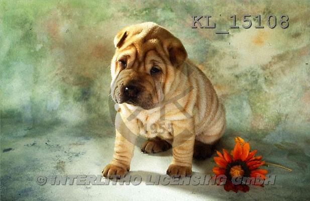 Interlitho, Alberto, ANIMALS, dogs, photos, shar pei, red flower(KL15108,#A#) Hunde, perros