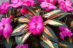 Annual & Biennial Plants