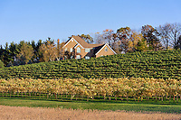 Vineyard and house, Breinigville, Pennsylvania, USA