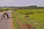 Tea Plantations carpet the hillsides in .Western Uganda