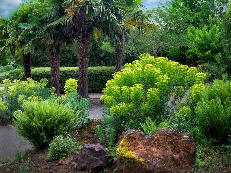 Mediterranean Spurge and palm trees. Oregon Garden, Oregon