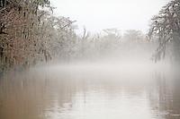 - Honey Bayou Swamp Tour
