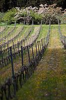 Europe/France/Provence-Alpes-Côte d'Azur/13/Bouches-du-Rhône/Cassis: Clos Val Bruyère AOC Cassis - le vignoble
