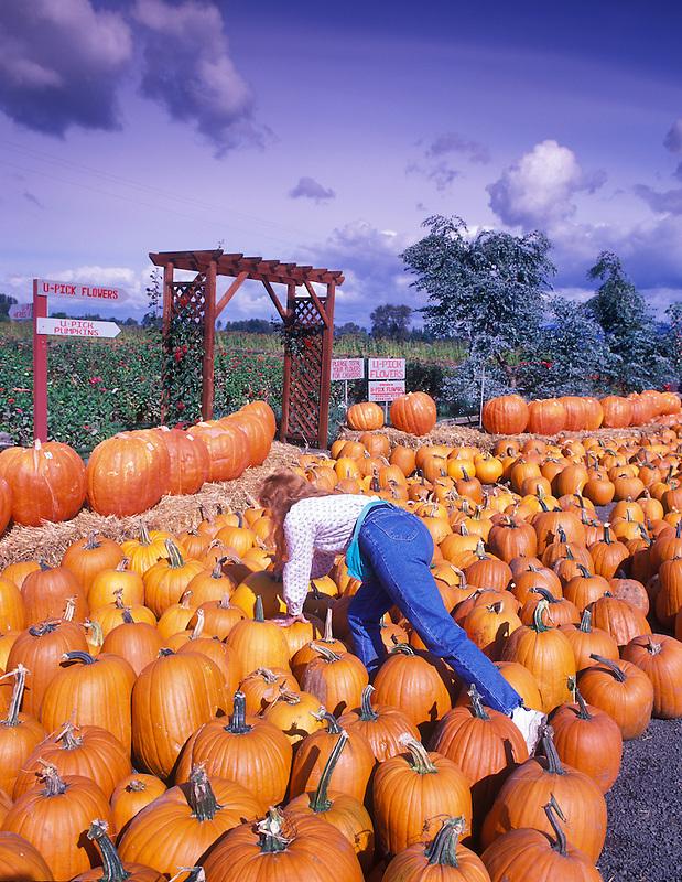 Lady choosing pumpkin. Harwood Farms, Oregon.