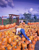 Lady choosing pumpkin. Harwood Farms, Oregon.
