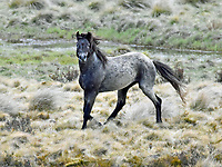 Brumbies and other Horses