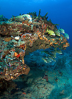 Under and over a coral reef ledge.