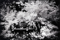 Park bench in overgrown bushes<br />
