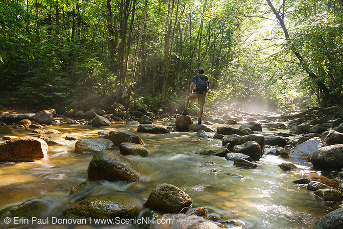 """Hiker on rock in morning fog along Cedar Brook during the summer months in the 45,000-acre federally designated """"Pemigewasset Wilderness"""" in Lincoln, New Hampshire USA. This area was logged during the East Branch & Lincoln Railroad (1893-1948)."""
