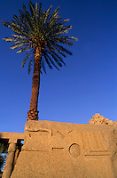 Bas-relief and a palm tree at sunset in the Karnak Temple Complex at Luxor, Egypt.