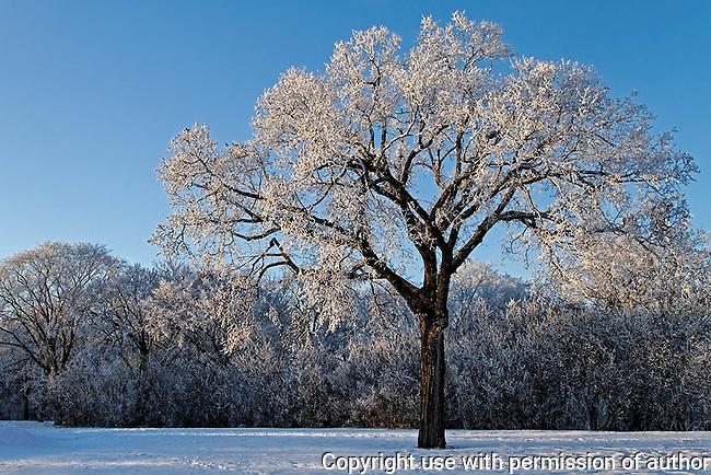 sunlight on hoarfrost in Assiniboine Park, Winnipeg, Manitoba, Canada