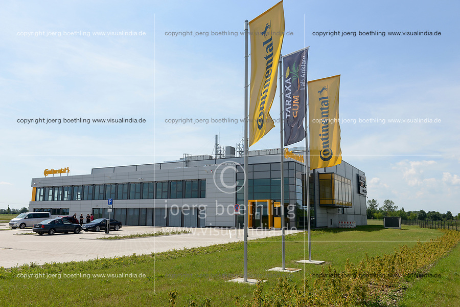 Germany, Taraxa gum, research project by Continental / DEUTSCHLAND, Anklam, Continental Forschungsprojekt Anbau russischer Loewenzahn (lat. Taraxacum koksaghyz) zur Gewinnung von Naturkautschuk, Taraxa Gum Lab Anklam von Continental