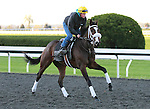 15 October 2011.  Stephanie's Kitten, winner of the Alcibiades stakes, and pointed towards the Breeder's Cup juvenile fillies exercises on the main track at Keeneland under the watchful eye of trainer, Wayne Catalano.