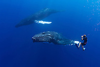 wildlife photographer James D. Watt photographing humpback whales, Megaptera novaeangliae, Pacific Ocean, Model Released - MR#: 000044