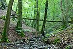 Europa, DEU, Deutschland, Rheinland-Pfalz, Hunsrueck, Baybachtal, Wald, Baeume, Natur, Umwelt, Landschaft, Jahreszeiten, Stimmungen, Landschaftsfotografie, Landschaften, Landschaftsphoto, Landschaftsphotographie, Tourismus, Touristik, Touristisch, Touristisches, Urlaub, Reisen, Reisen, Ferien, Urlaubsreise, Freizeit, Reise, Reiseziele, Ferienziele, Der Baybach ist ein knapp 30 km langer rechter Nebenfluss der Mosel in Rheinland-Pfalz. <br /> <br /> [Fuer die Nutzung gelten die jeweils gueltigen Allgemeinen Liefer-und Geschaeftsbedingungen. Nutzung nur gegen Verwendungsmeldung und Nachweis. Download der AGB unter http://www.image-box.com oder werden auf Anfrage zugesendet. Freigabe ist vorher erforderlich. Jede Nutzung des Fotos ist honorarpflichtig gemaess derzeit gueltiger MFM Liste - Kontakt, Uwe Schmid-Fotografie, Duisburg, Tel. (+49).2065.677997, ..archiv@image-box.com, www.image-box.com]