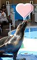 Valentine's Day attractions at Sunshine Aquarium