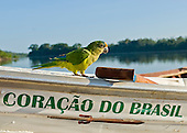 Pará State, Brazil. Iriri River. Aldeia Kararaô (Kayapo). The expedition boat 'Coração do Brasil' with parrot.