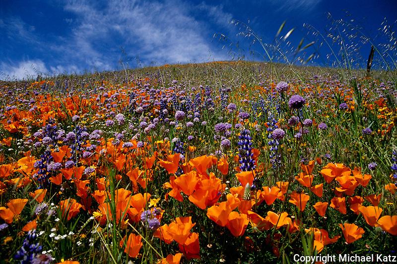 Wildflowers, Gorman