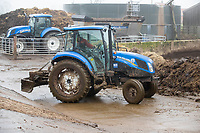 3-3-2021 New Holland T4 tractor being used on a dairy farm in Leicestershire <br />  ©Tim Scrivener Photographer 07850 303986<br />      ....Covering Agriculture In The UK....