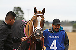 HOT SPRINGS, AR - March 11: Whitmore #4 prior to winning the Hot Springs Stakes at Oaklawn Park on March 11, 2017 in Hot Springs, AR. (Photo by Ciara Bowen/Eclipse Sportswire/Getty Images)