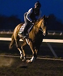 Uni, trained by trainer Chad C. Brown, exercises in preparation for the Breeders' Cup Mile at Keeneland Racetrack in Lexington, Kentucky on November 2, 2020.