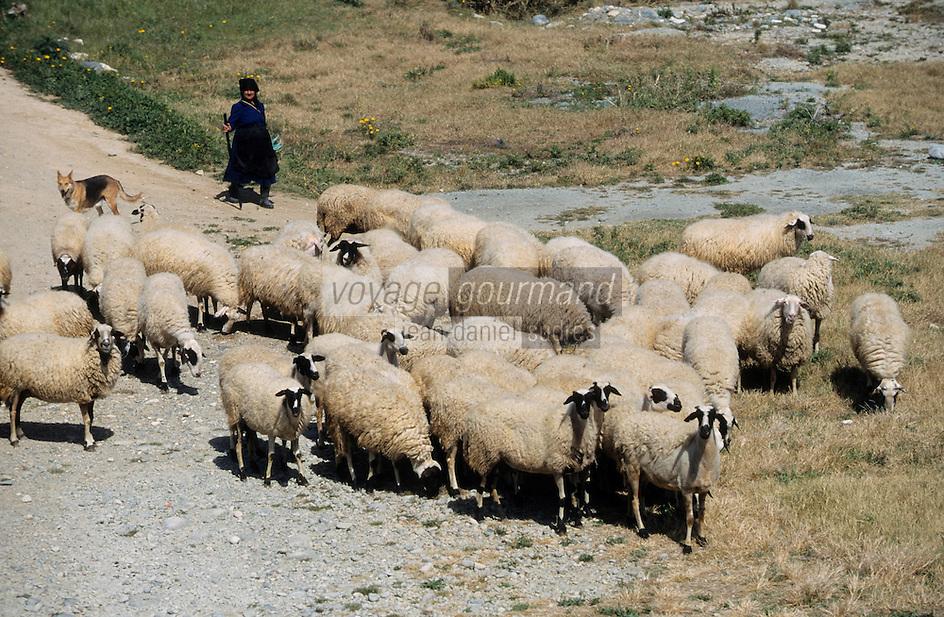 Europe/Chypre/Kourion : Bergère et son troupeau de moutons