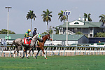 Scenes from Gulfstream Park.  All Tied Up (KY) with jockey Luis Saez on board. Hallandale Beach, Florida 02-22-2014