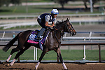 OCT 29 2014:Sivoliere, trained by Chad Brown, exercises in preparation for the Breeders' Cup Juvenile Fillies Turf at Santa Anita Race Course in Arcadia, California on October 29, 2014. Kazushi Ishida/ESW/CSM