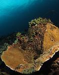Orchid Island, Taiwan -- Yellow/orange coral